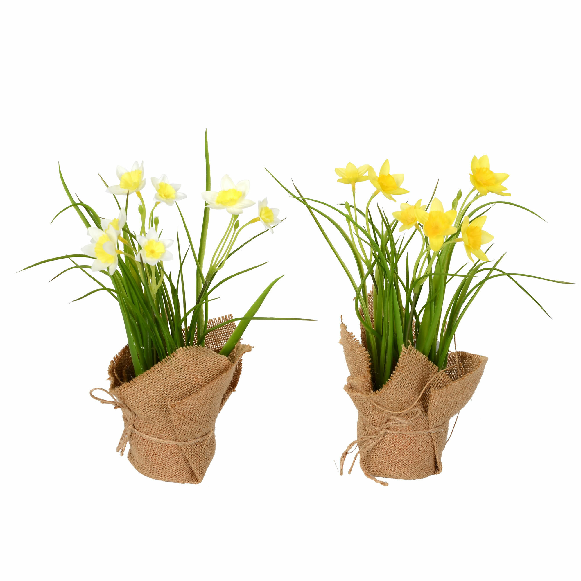 August Grove Daffodil Floral Arrangements And Centerpieces In Pot Reviews Wayfair