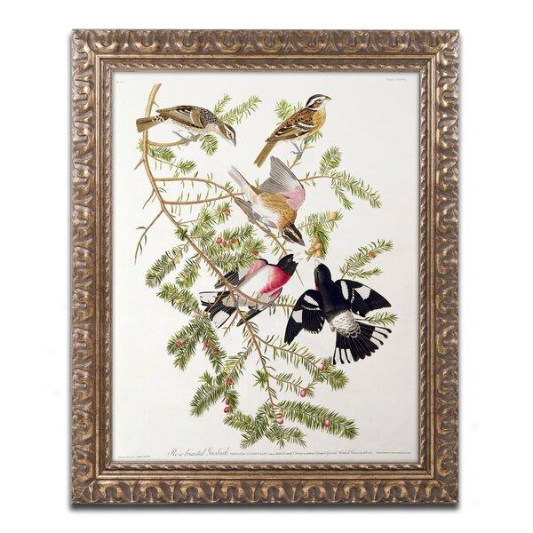 Trademark Art Rose Breasted Grosbeak By John James Audubon Framed Graphic Art Wayfair
