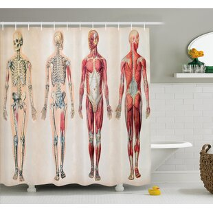 Human Anatomy Vintage Chart of Body Front Back Skeleton and Muscle System Bone Mass Graphic Single Shower Curtain