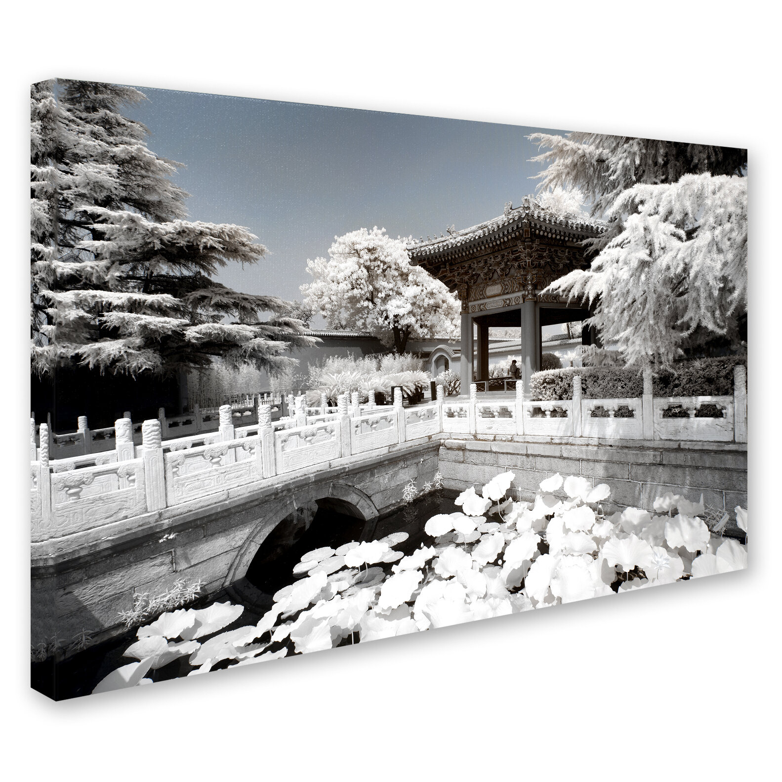 Trademark Art White Lotus By Philippe Hugonnard Photographic Print On Wrapped Canvas Wayfair
