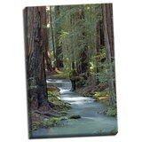 'Redwood Forest IV' Photographic Print on Wrapped Canvas