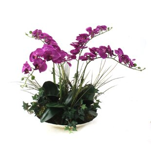 Orchids in Decorative Bowl byDalmarko Designs