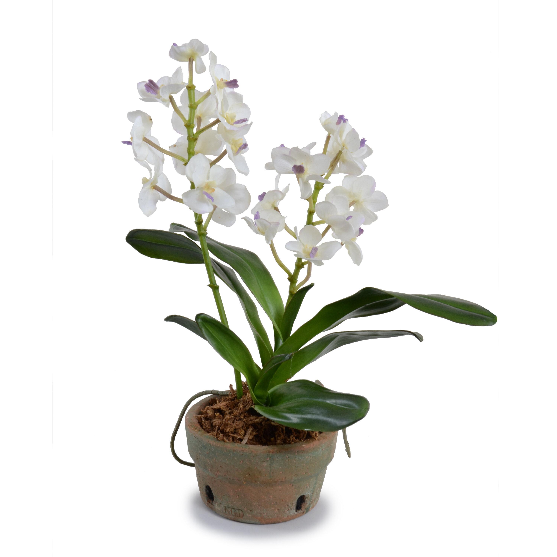 Rosdorf Park Vanda Orchids Floral Arrangement In Pot Wayfair