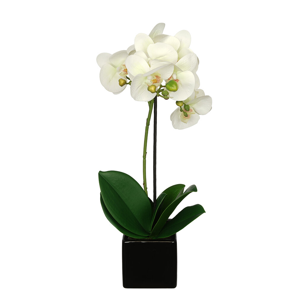 House Of Silk Flowers Artificial Baby Cube Ceramic Orchid Flowers In
