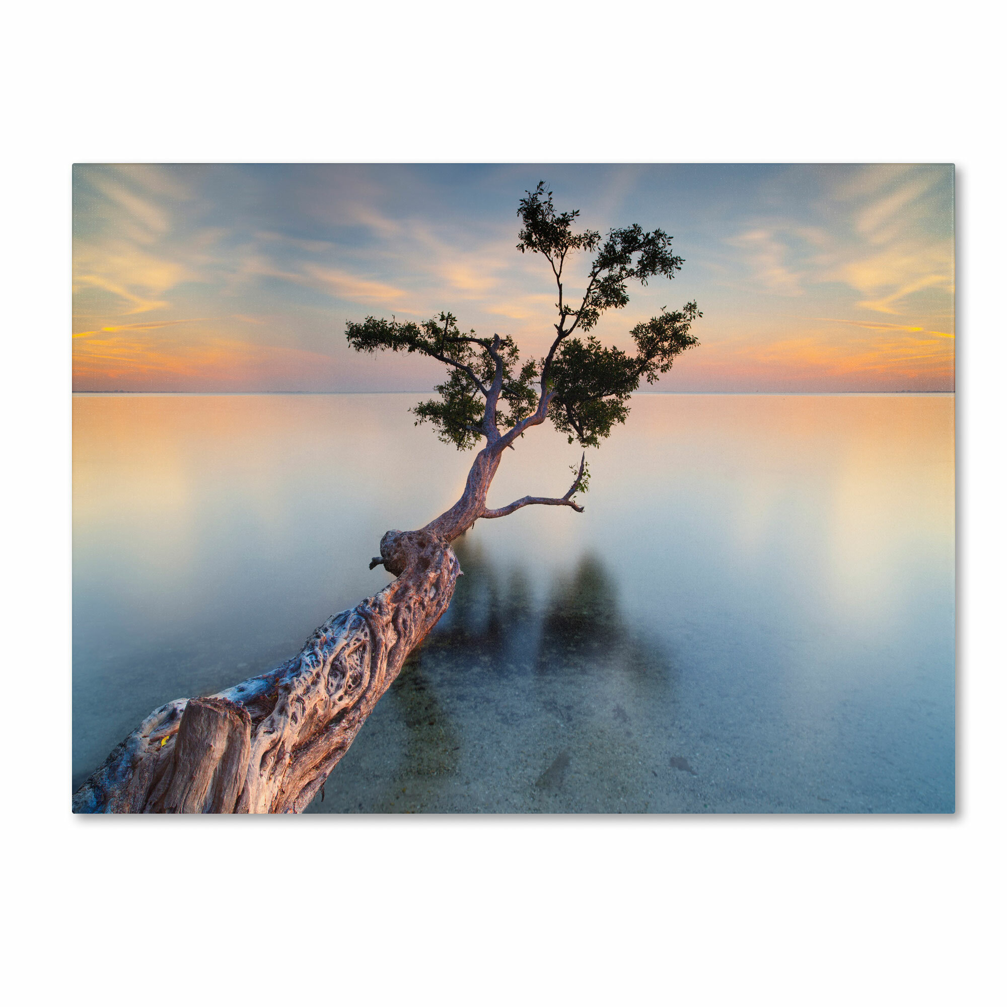 Trademark Art Water Tree Xiv By Moises Levy Photographic Print On Wrapped Canvas Reviews Wayfair