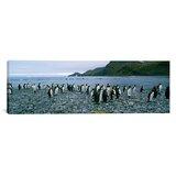 Panoramic Penguin Wall Art You Ll Love In 2021 Wayfair
