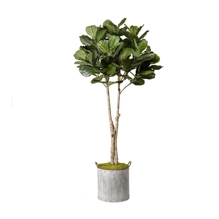 Three Posts  Fiddle Leaf Fig Tree Foliage Plant in Planter