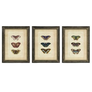 illustrated butterfly framed prints set of 3
