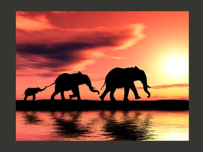 Elephants Families 1 93m X 250cm Wallpaper