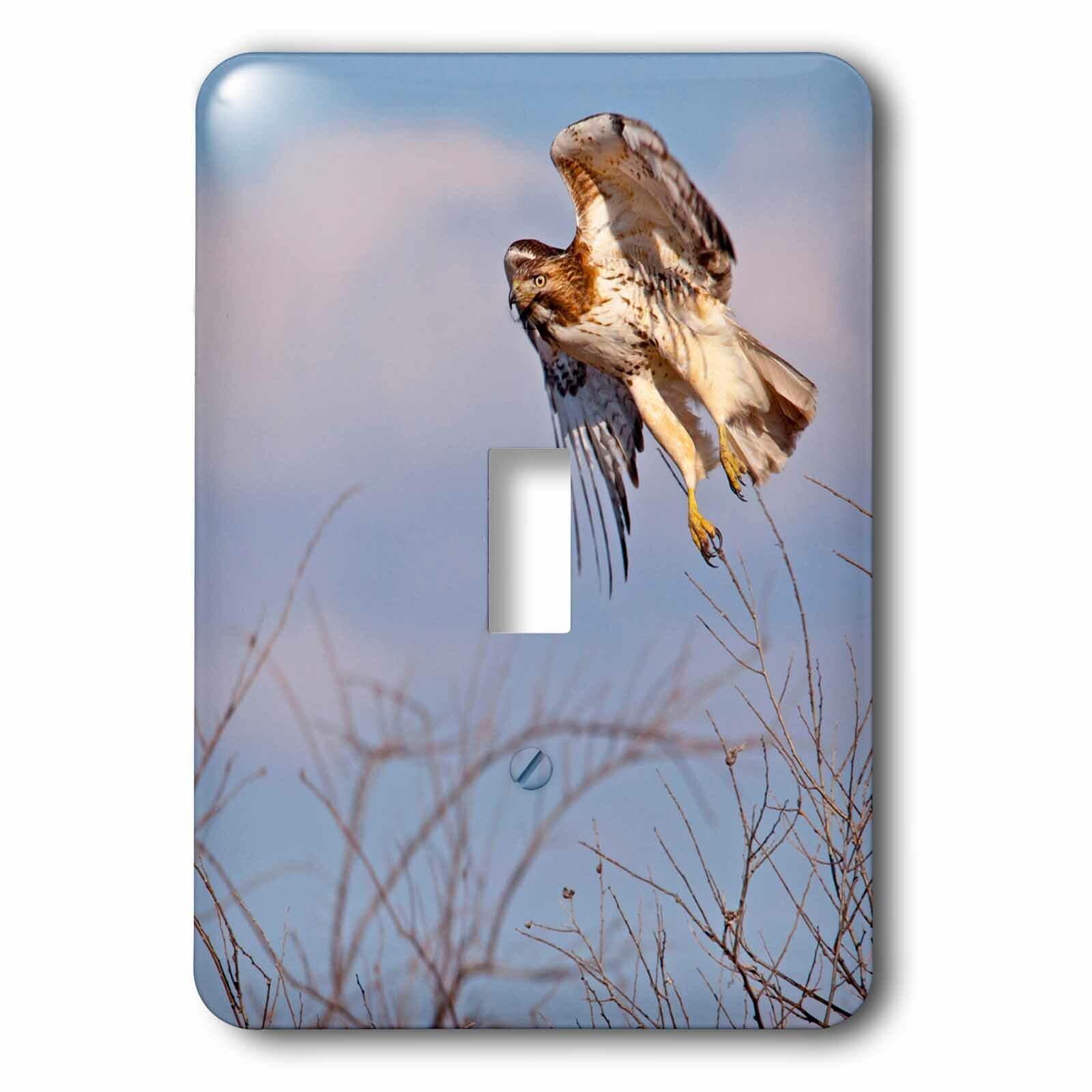 3drose Hawk 1 Gang Toggle Light Switch Wall Plate Wayfair