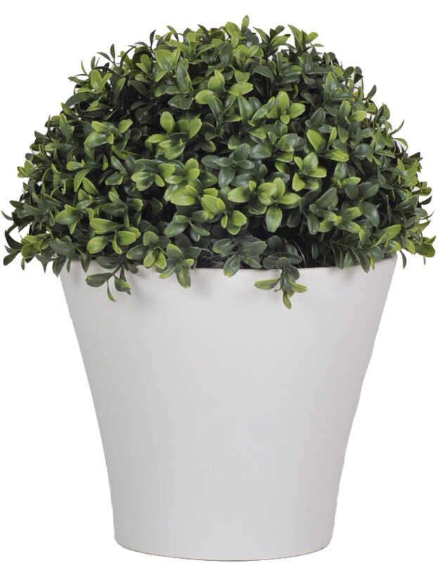 House of Silk Flowers Artificial Half Ball Boxwood Topiary in Pot ...