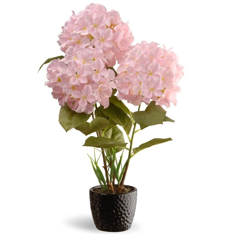 National Tree Co. Hydrangea Flowers in Pot & Reviews | Wayfair
