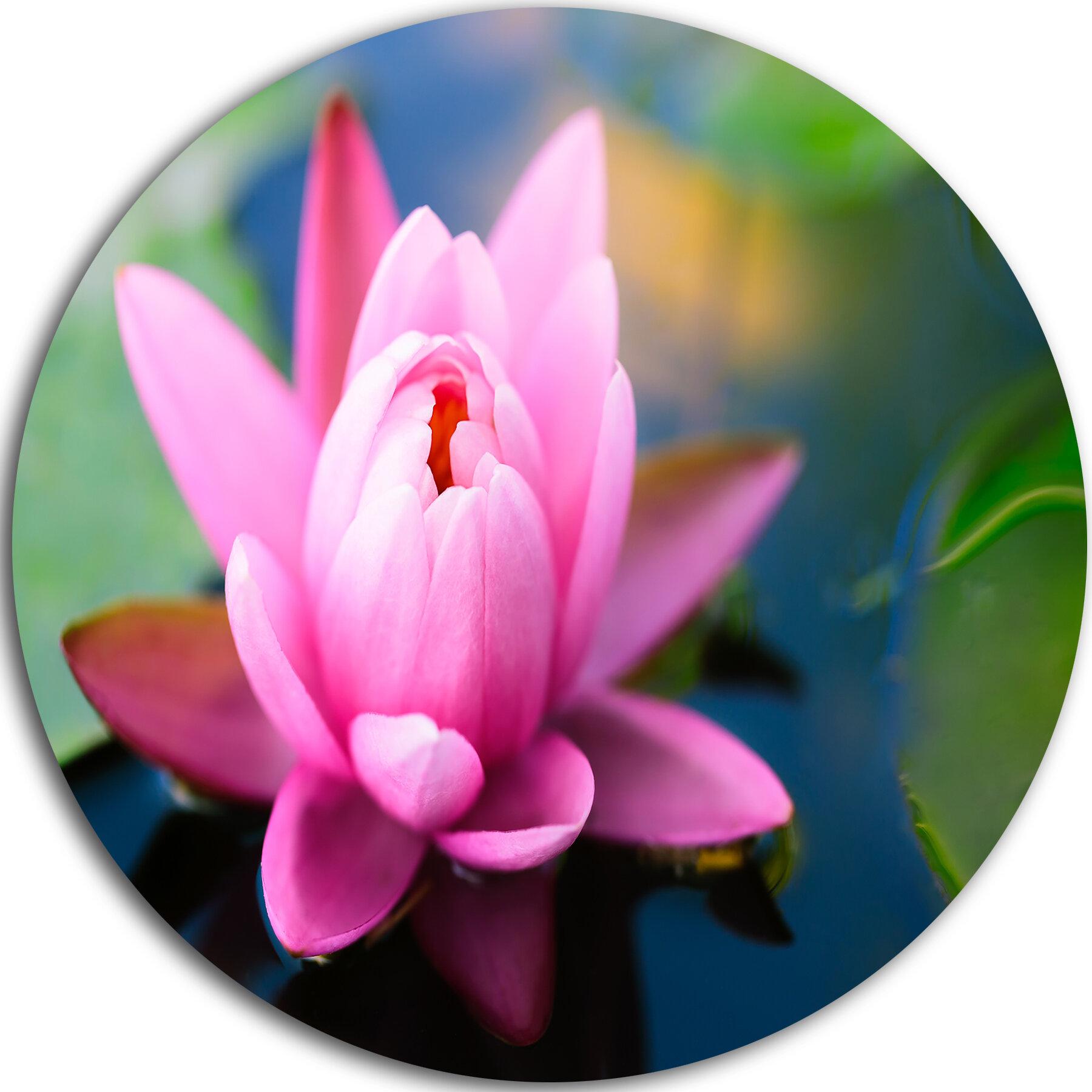 Designart Lotus Flower In The Pond Photographic Print On Metal