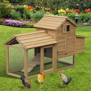 Calzada Solid Wood Enclosed Outdoor Backyard Chicken Coop With Nesting Box And Chicken Run By Tucker Murphy Pet