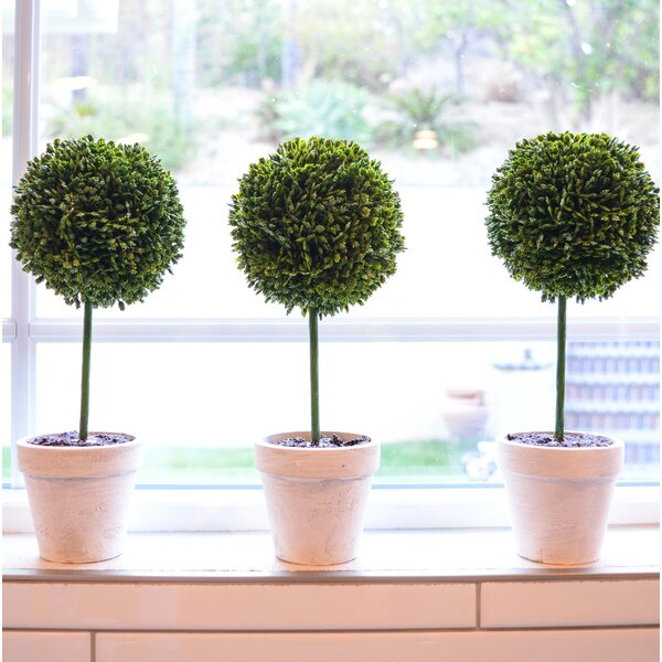 Faux Preserved Boxwood Floor Topiary In Pot Reviews Joss Main