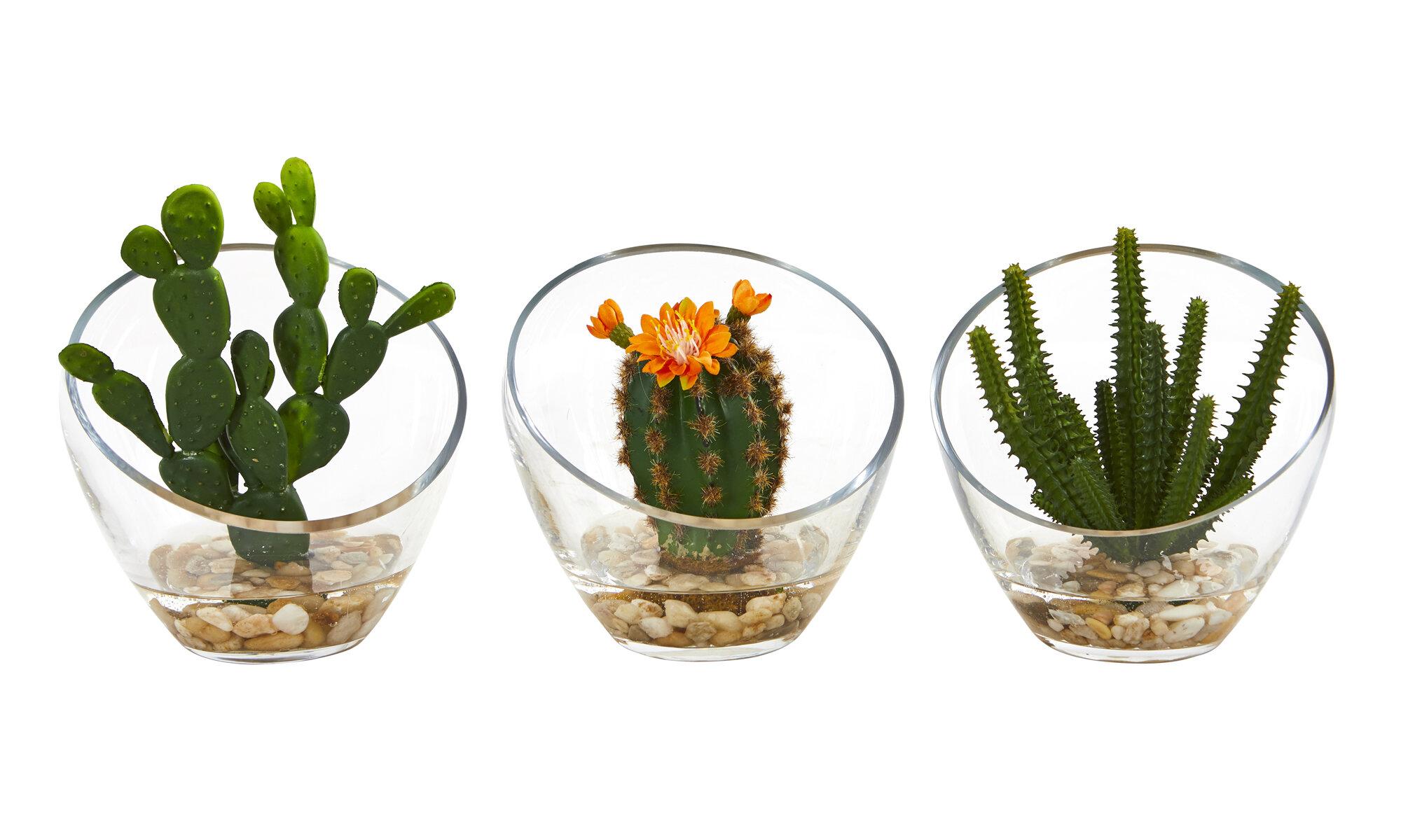 Primrue 3 Piece Mixed Artificial Cactus Succulent In Decorative Vase Set Wayfair