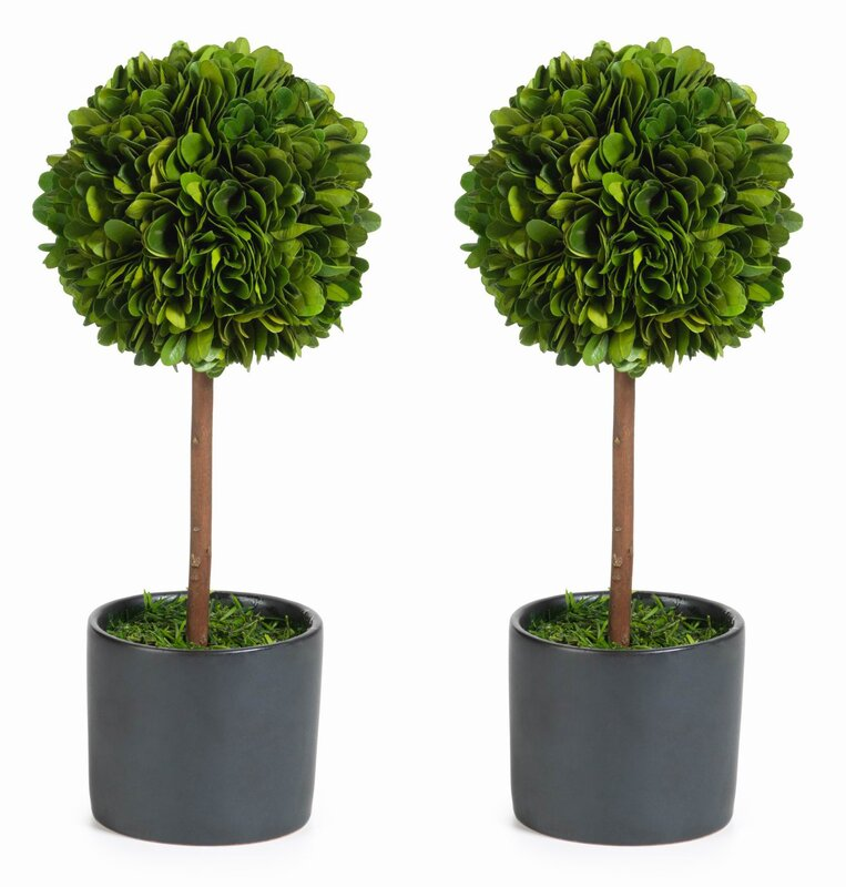 single ball preserved boxwood topiary in pot