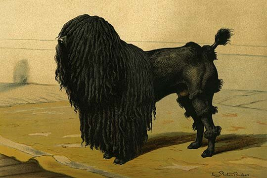 Buyenlarge Truffle Dog By Vero Shaw Painting Print Wayfair