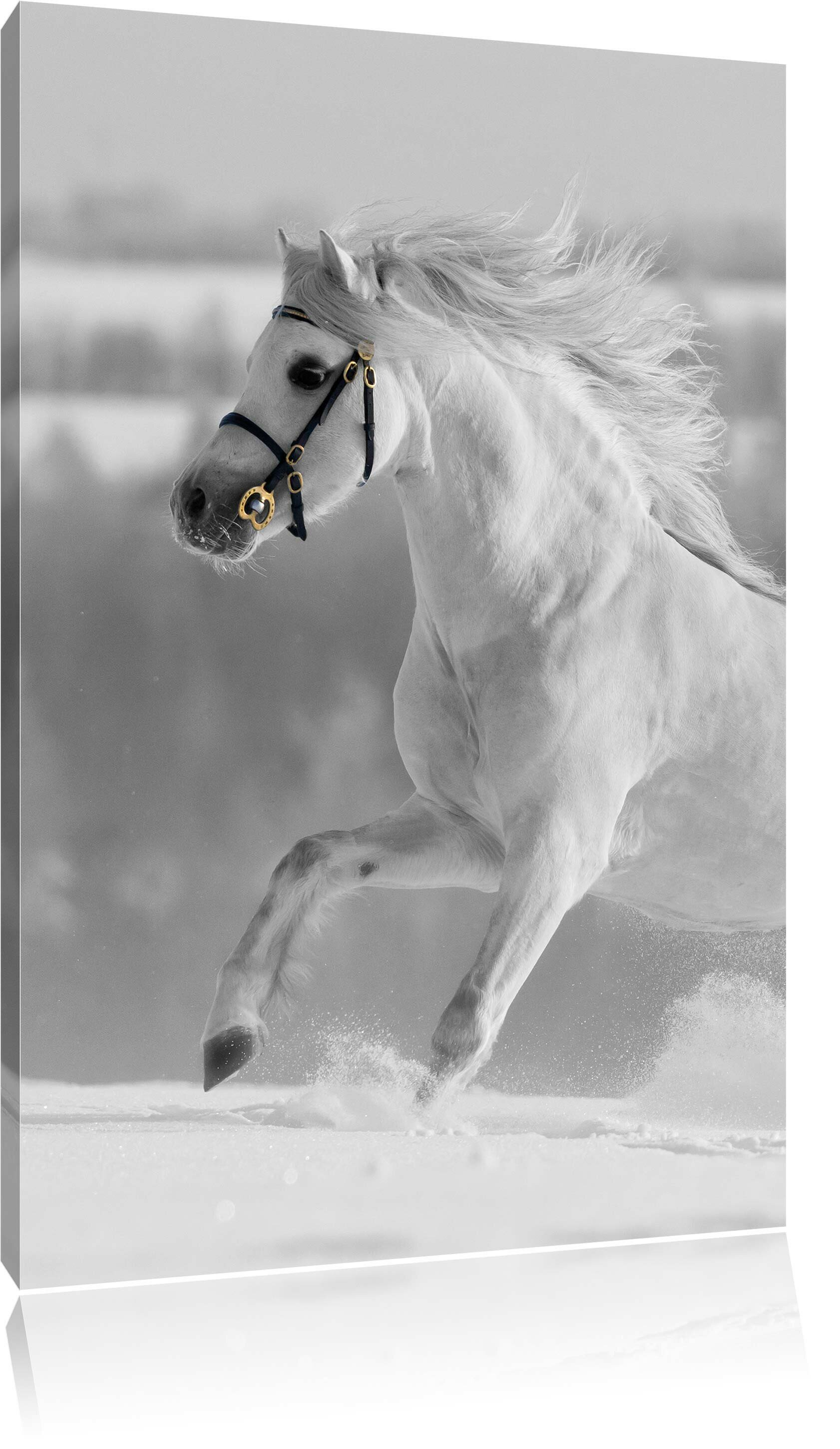 East Urban Home Beautiful White Horse In Snowy Meadow Graphic Art Print On Canvas