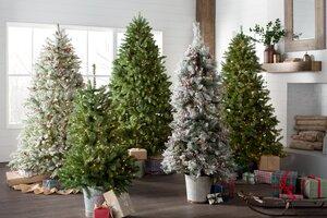 Christmas Tree Types