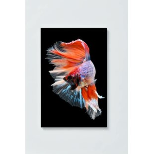 Fighting Fish Magnetic Wall Mounted Cork Board By Ebern Designs