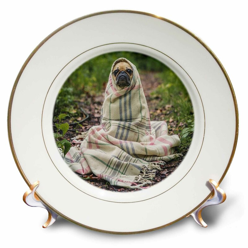 East Urban Home Image Of Pug Puppy In Plaid Blanket Porcelain Decorative Plate Wayfair