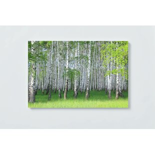 Birch Forest Magnetic Wall Mounted Cork Board By Ebern Designs