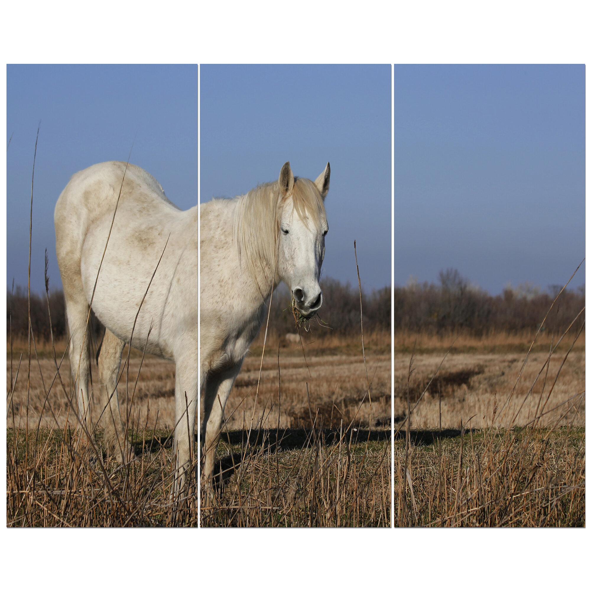 East Urban Home White Wild Horse In Grassland Photographic Print Multi Piece Image On Wrapped Canvas Wayfair