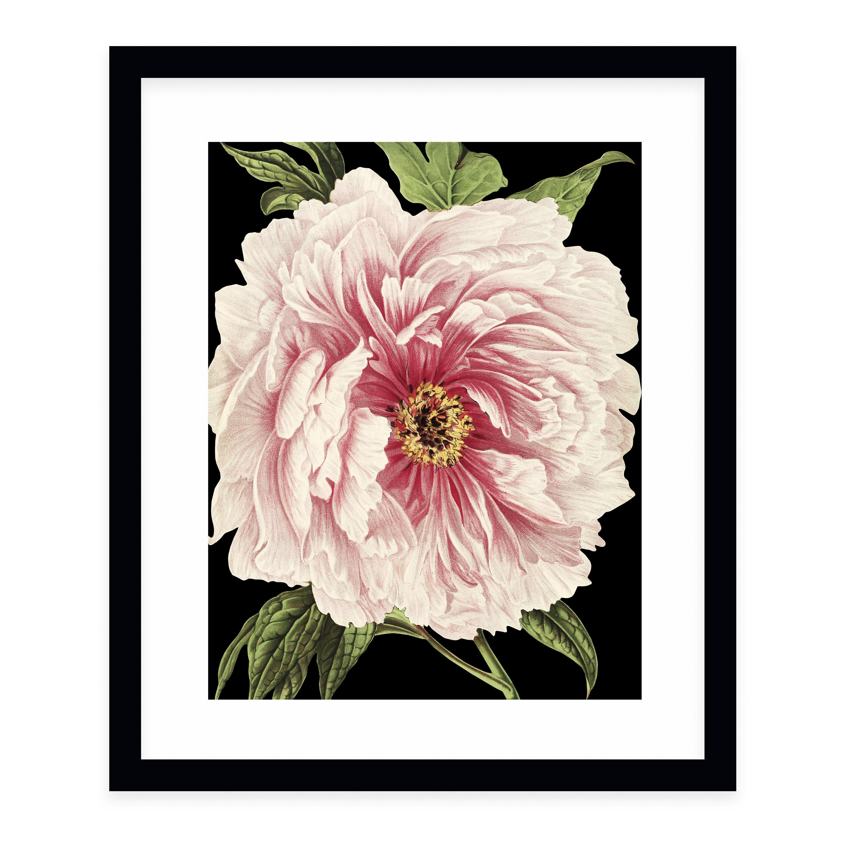 Charlton Home Flower Thirteen Black By Terri Ellis Picture Frame Graphic Art Print On Paper Wayfair