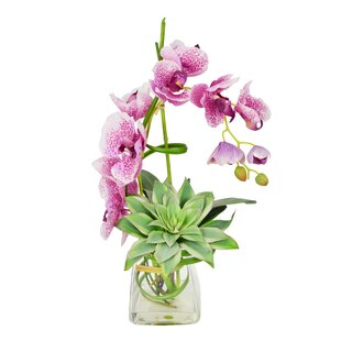 Spotted Phalaenopsis and Echeveria in Water Vase