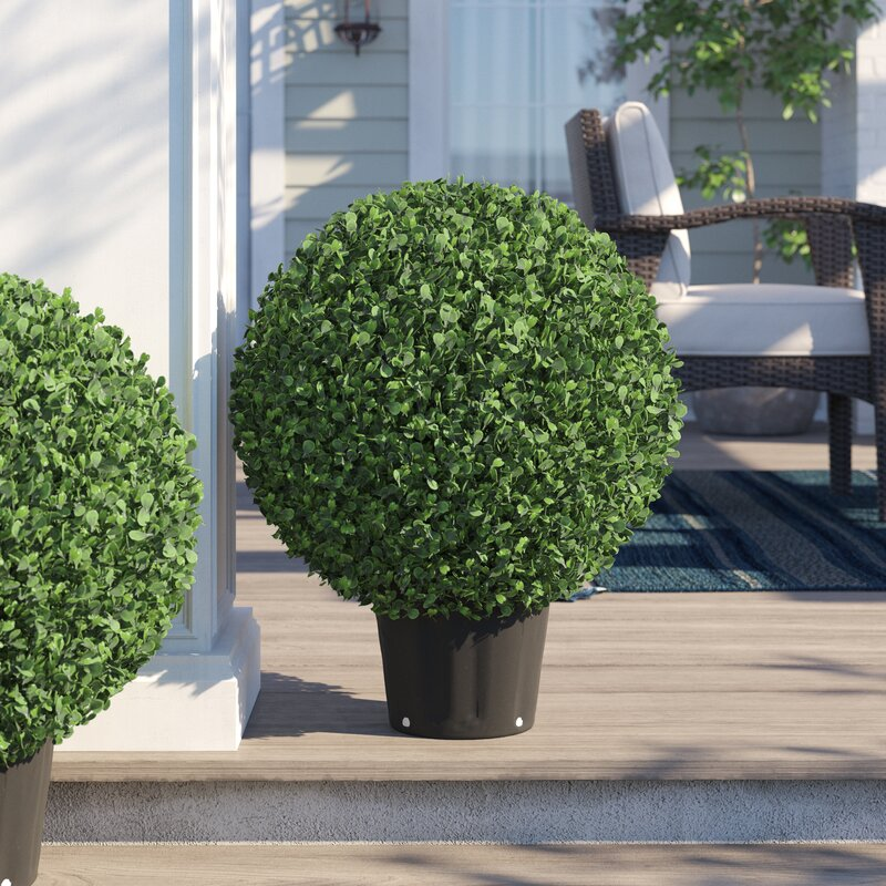 Three Posts Ball Boxwood Topiary In Planter Reviews Wayfair