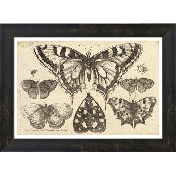 Evive Designs Vintage Butterfly II by Julia Kearney Framed Painting ...