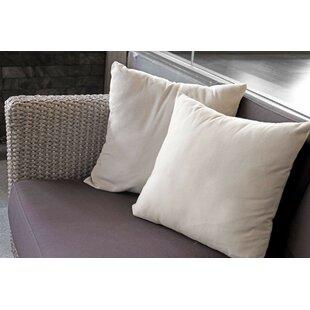 Adaline 100% Cotton Pillow Insert (Set of 2)