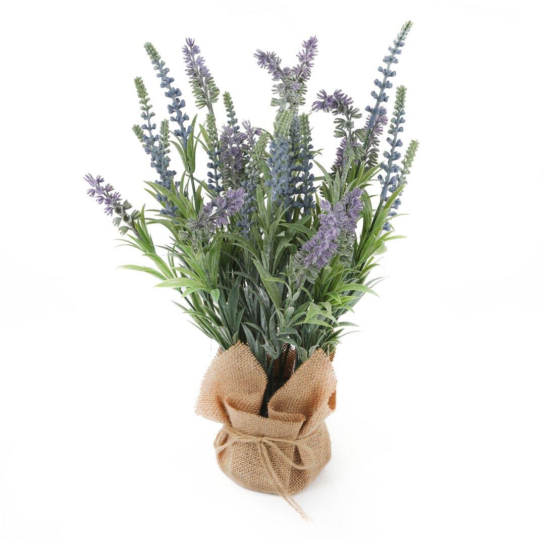 Desktop Lavender Plant in Pot