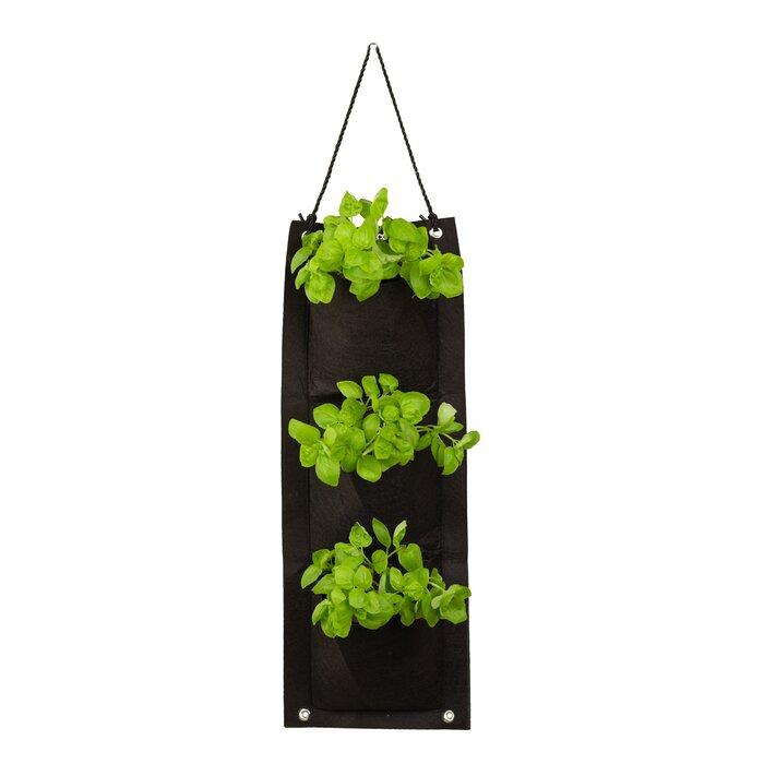 Touch of Eco Organic Hanging Basil Growing Kit