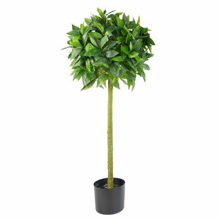 Topiary Bay Tree By The Seasonal Aisle