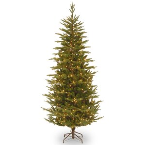 Type Of Christmas Trees