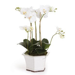 Phalaenopsis Floral Arrangement in Ceramic Pot