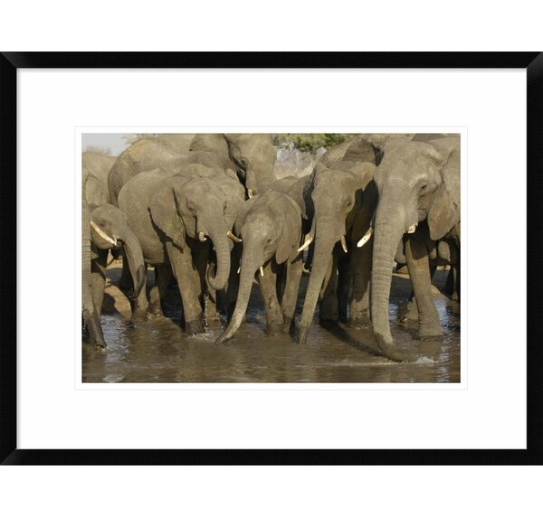 Global Gallery African Elephant Herd At Watering Hole Framed Photographic Print