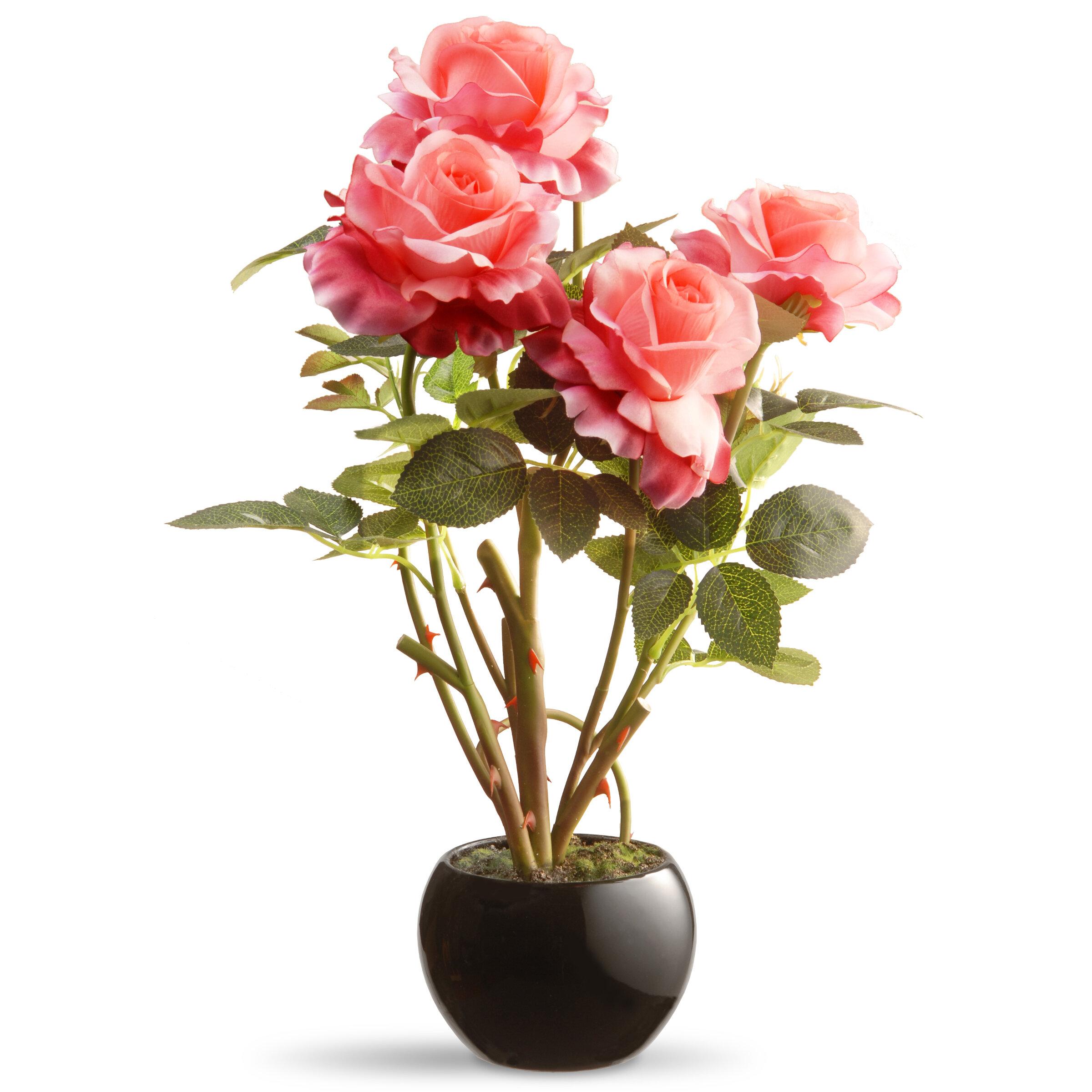 225 & Rose Flowers in Pot