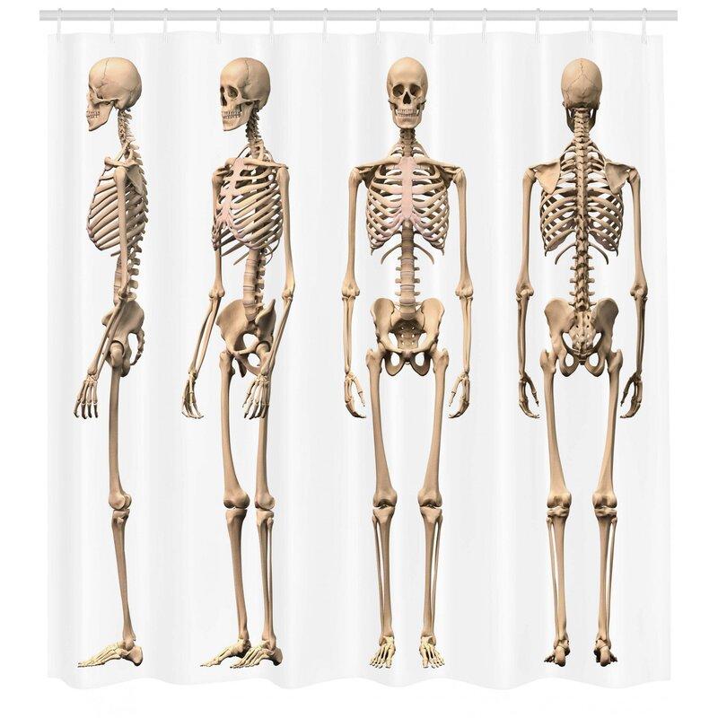 diagram of male skeleton ambesonne human anatomy man male human skeleton skull different  ambesonne human anatomy man male human