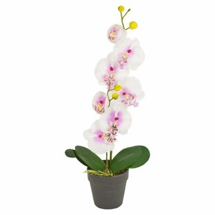 Orchid Flowering Floor Plant In Pot (Set Of 2) By The Seasonal Aisle