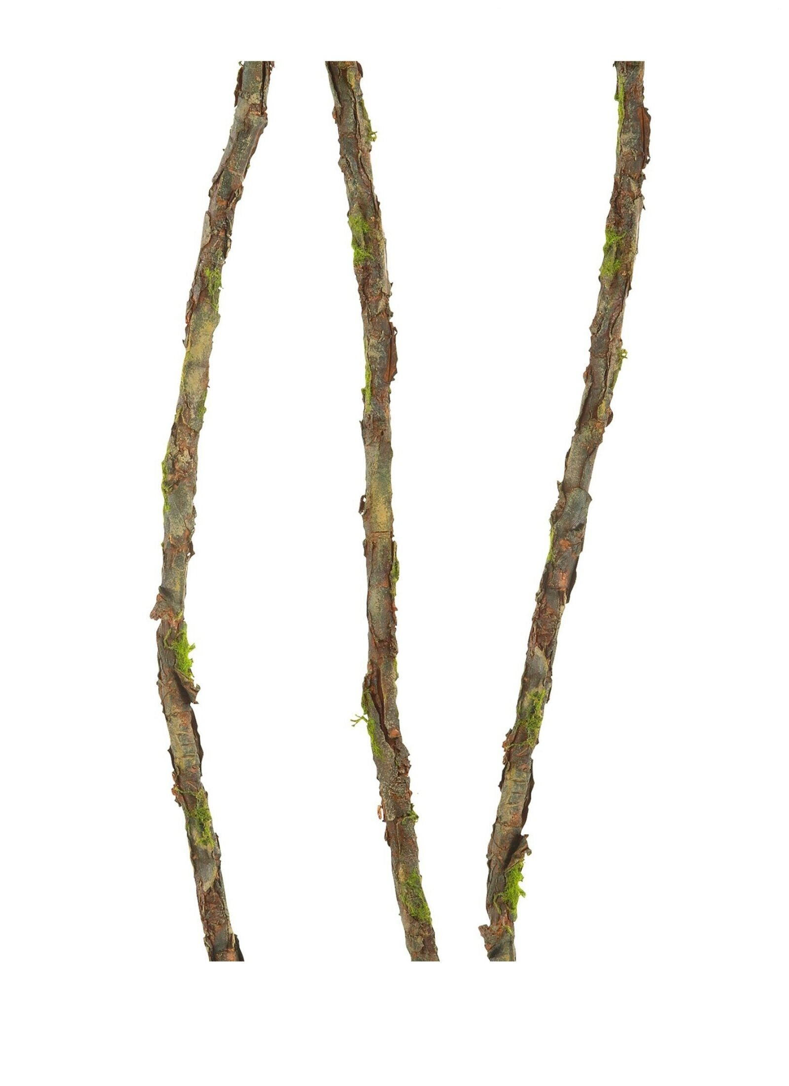 Charlton Home Long Twig Branch Wayfair