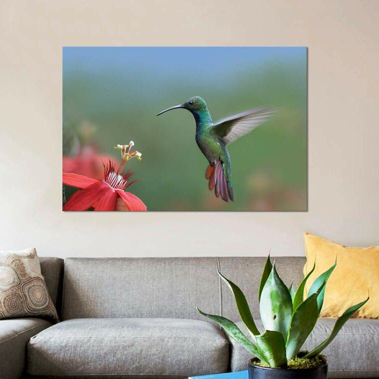 East Urban Home Green Breasted Mango Hummingbird Male Foraging Costa Rica Photographic Print On Canvas Wayfair