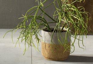 Planters for Patio Season_image