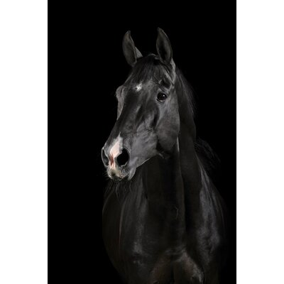 Majestic Black Horse Framed Photographic Print