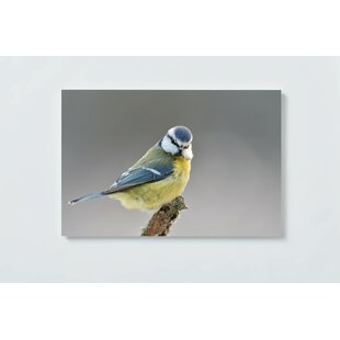 Bird Motif Magnetic Wall Mounted Cork Board By Ebern Designs