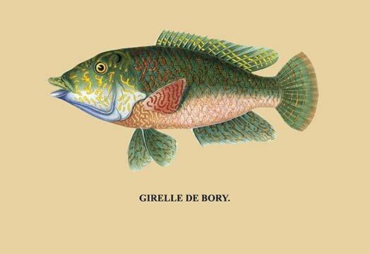 Buyenlarge Girelle De Bory Graphic Art Wayfair