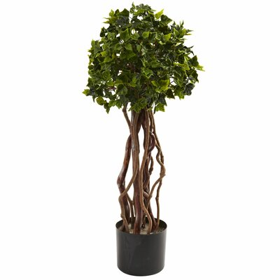 Alcott Hill English Ivy Round Topiary in Pot