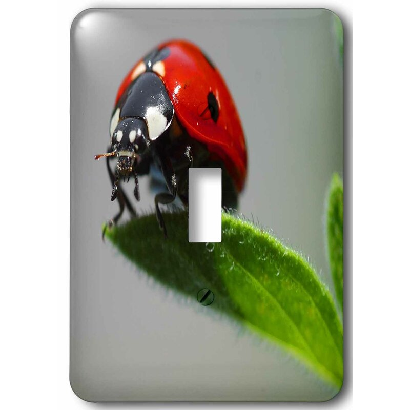 3drose Ladybug Up Real Close 1 Gang Toggle Light Switch Wall Plate Wayfair